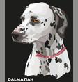 coloful portrait of dalmatian vector image