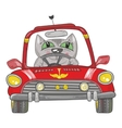 Cat on the car vector image