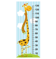 long neck giraffe height measure vector image