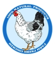 Black and white broody chicken vector image