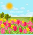 tulip flowers field sunny day blue sky vector image