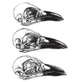 Crow Skull vector image