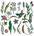 Colorful hand drawn flowers and herbs set vector image