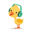 little yellow duck chick listening to music on vector image