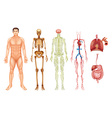 Human body systems vector image vector image