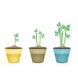 Fresh Celery Root in Ceramic Flower Pots vector image