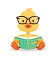 little yellow duck chick in glasses sitting and vector image vector image