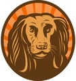 Cocker spaniel head front view with sunburst vector image vector image