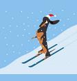 dachshund descends the hillside on skis vector image