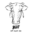 Hand drawn Cows head outline Beef organic meat vector image