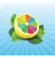 colorful lemon background vector image vector image