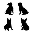 french bulldog purebred dog standing in side view vector image