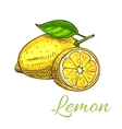 Lemon fruit sketch icon vector image