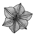flower 209 14 vector image