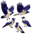 Crows on white background vector image