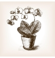 Orchid flower hand drawn sketch style vector image