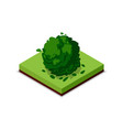 green bush isometric 3d icon vector image