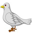 white dove cartoon vector image