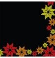 flower burst on black background vector image