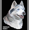 colorful portrait of siberian husky vector image