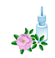 Essential Oil with Beautiful Pink Damask Rose vector image