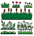 greenery green grass flower plants and decorative vector image