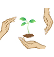 hands protecting green plant vector image vector image