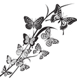 Butterflies design vector image