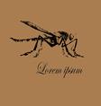 Mosquito Logo vector image