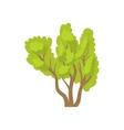 Green multi stemmed tree icon cartoon style vector image