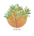 Orange Tree with Green Leaves and Oranges vector image