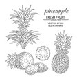 pineapple set vector image