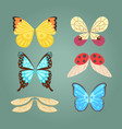 wings isolated animal feather pinion butterfly vector image