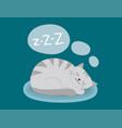 portrait cat animal sleep pet cute kitten purebred vector image