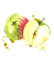 Watercolor apples summer hand drawn fruit vector image
