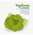 lettuce fresh natural vegetarian cuisine vector image