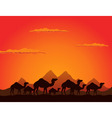 camels deserts vector image