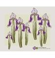 card design with decorative iris flower vector image