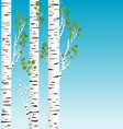 Birch trees with green leaves background vector image