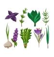 Set of 9 herbs vector image