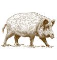 engraving wild boar vector image