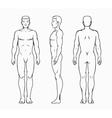 Male body vector image