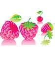 ripe raspberries vector image