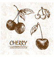 digital detailed cherry hand drawn vector image