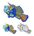 Mandarin Fish vector image