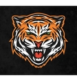 Aggressive tiger face On dark background vector image