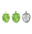 green hops set vector image