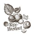hazelnut logo design template fresh walnut vector image