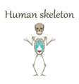 human organ icon in flat style human skeleton vector image