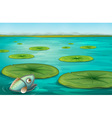 lily pads vector image vector image